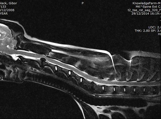 פריצת דיסק MRI כלב