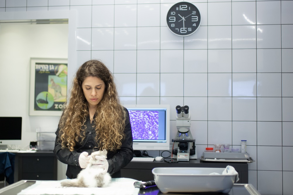 בדיקה נוירולוגית לחתול