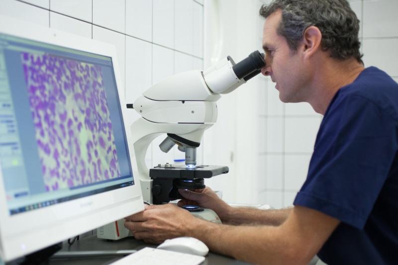 אנאליזה ציטולוגית של דגימת נוזל מכלב